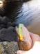 sprig walleye